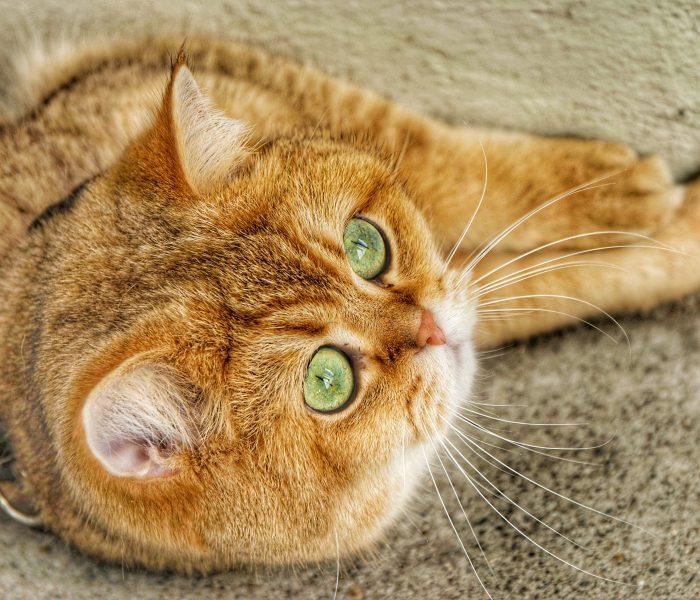 Menyewa jasa cat-sitter selama liburan