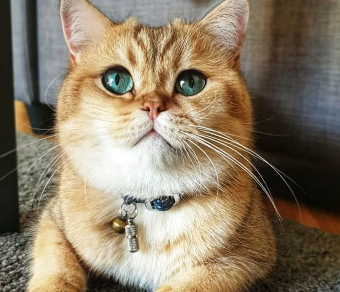 Kucing, binatang yang menggemaskan sekaligus membingungkan